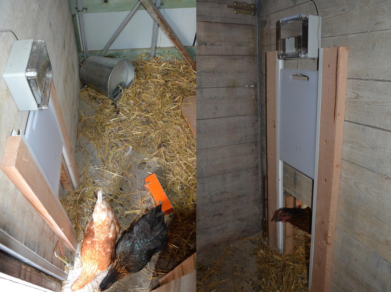 Kippen afschermen tegen de vos