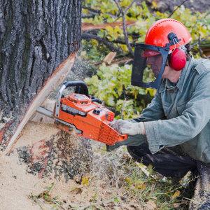 grote boom verwijderen