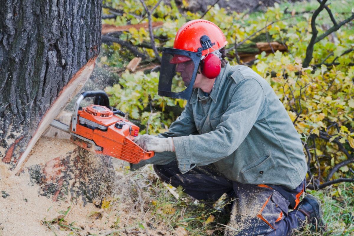 kapvergunning bomen regelgeving