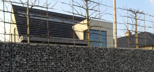 leibomen planten aan modern huis