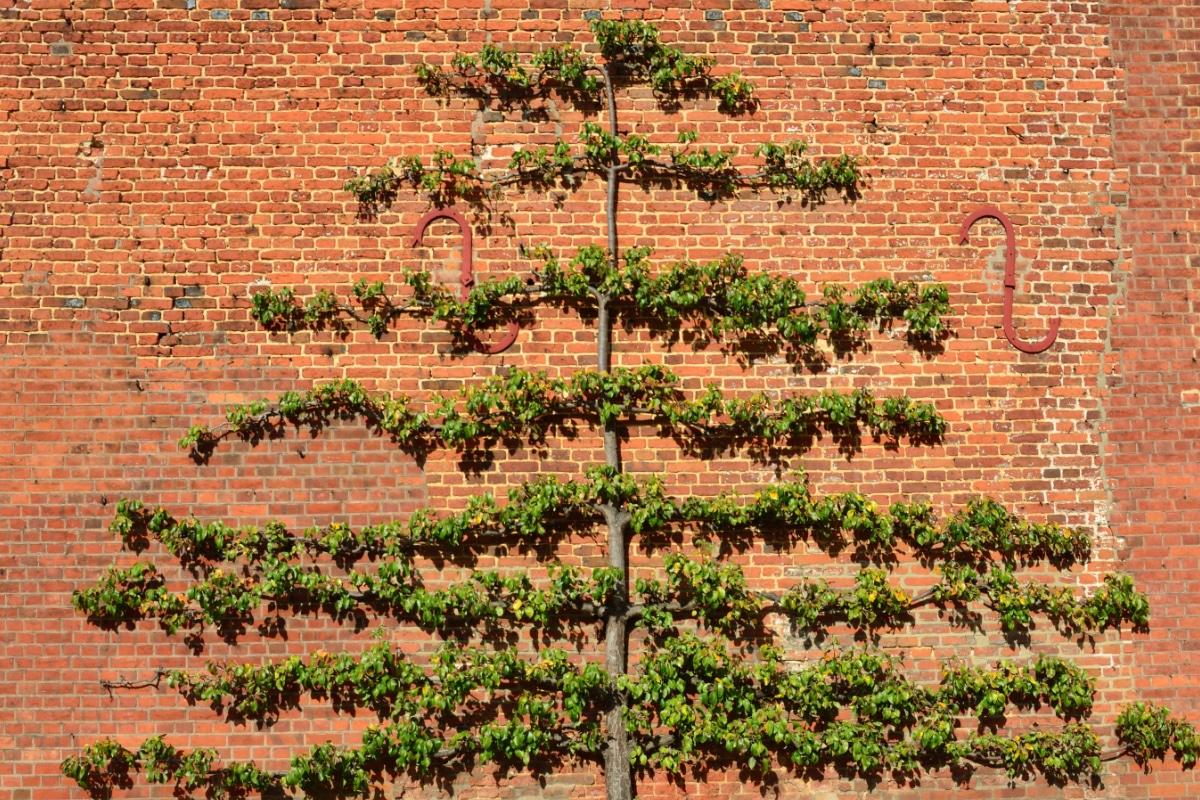leibomen planten als decoratie